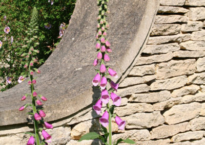 Very welcome self seeded Foxgloves
