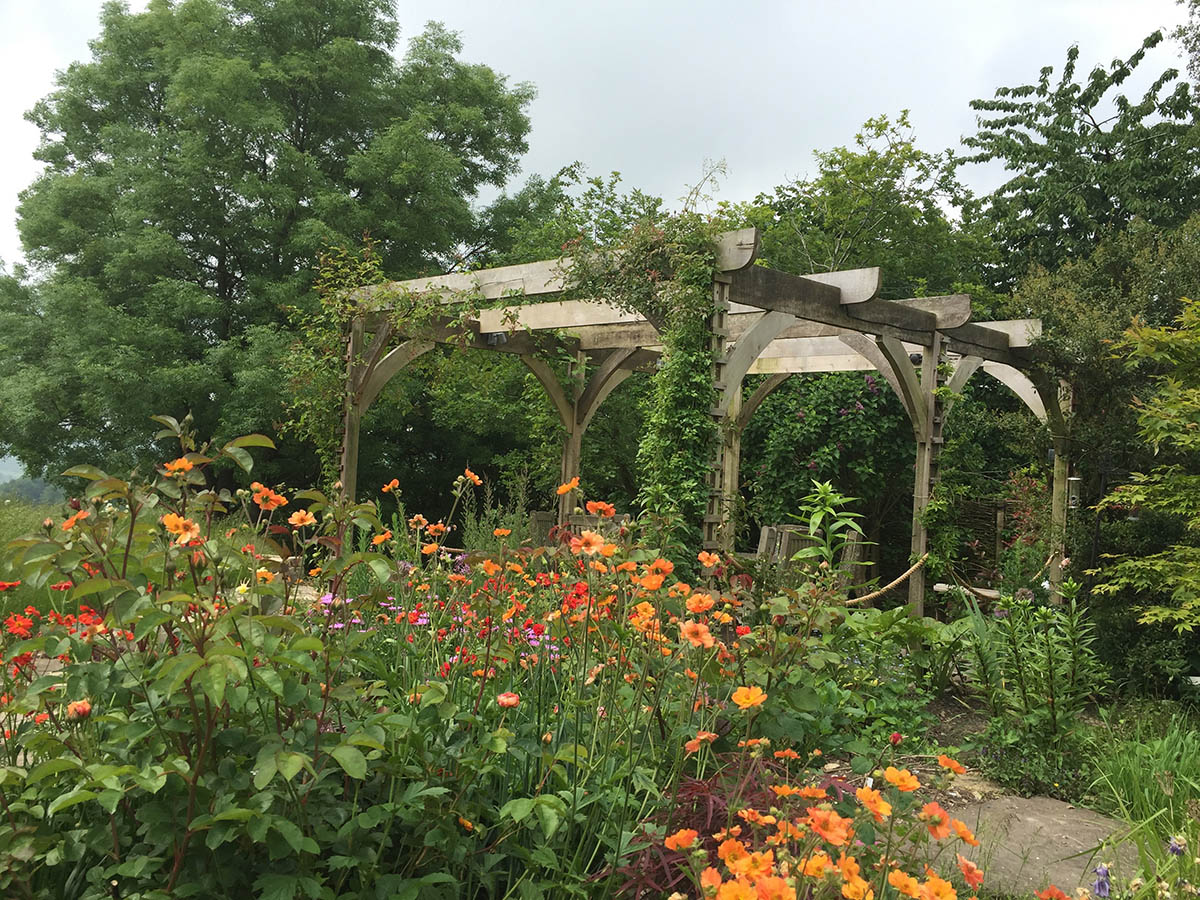 View from the conservatory over the orange Herbaceous Potentillas and red Dahlias, with the green oak pergola in the distance