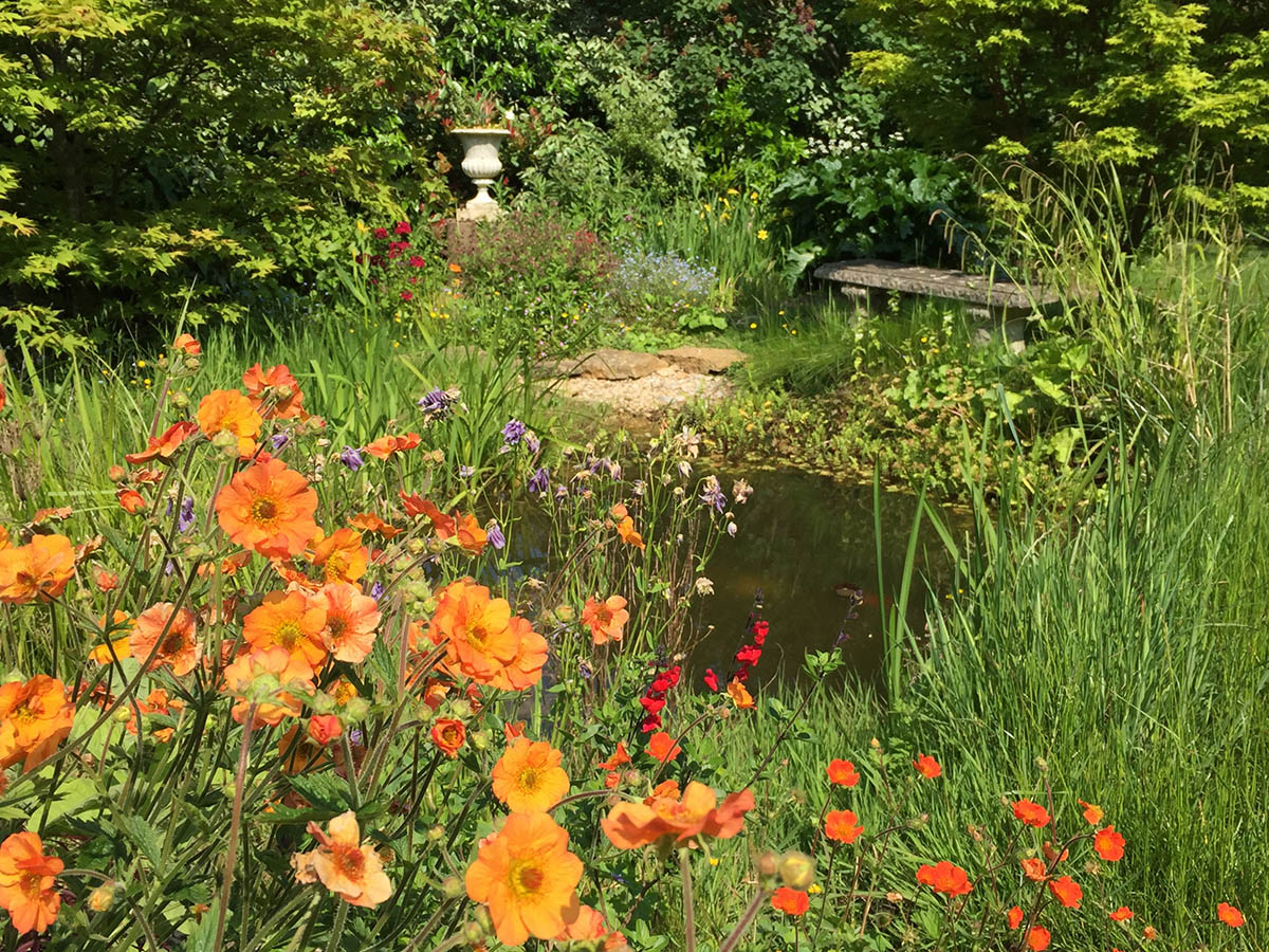 The wildlife pond edged with the orange herbaceous Potentillas and marginal plants.There's a beach at one end to allow the animals to drink and the birds to bathe, with a stone seat for viewing.