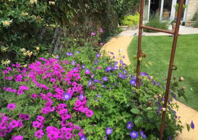 The purple Geranium psilostemon with blue Geranium Rozanne