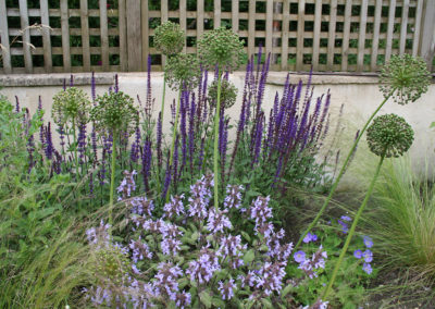 Salvia Purpurascens at the front with Salvia Caradonna behind, Allium seed heads coming through and Stipa tenuissima on the edge