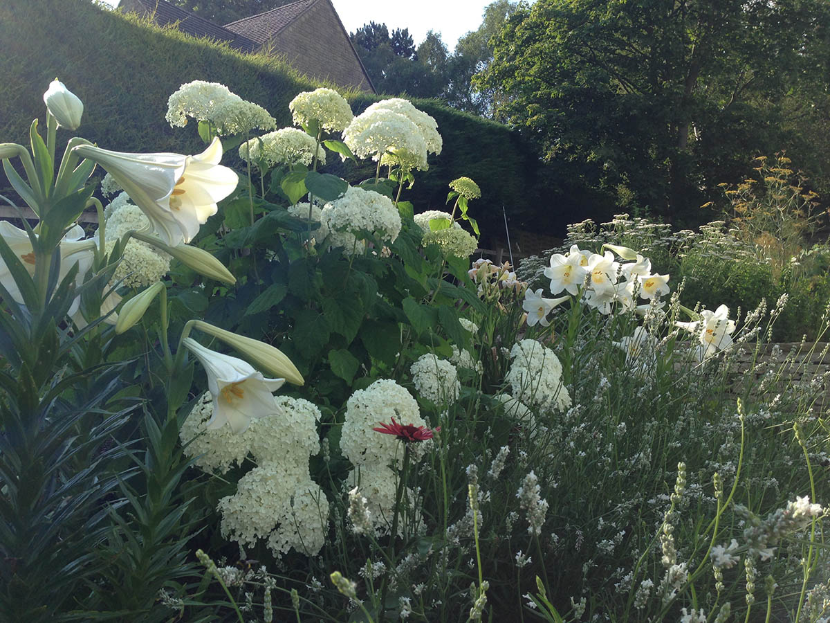 The White and Green Herbaceous Border