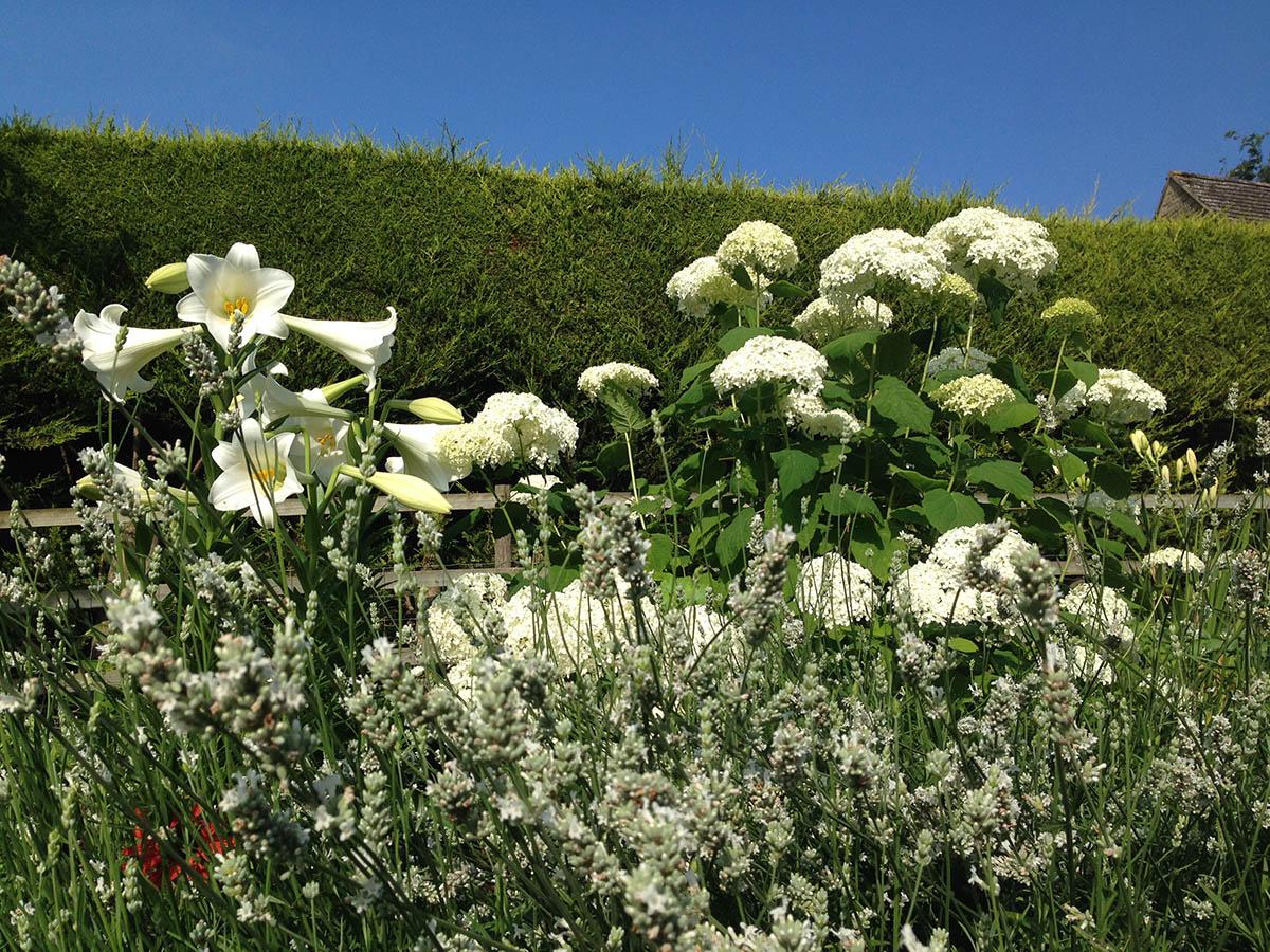 Lilium Longiflorum, Hydrangea arborescens Annabelle with White Lavender