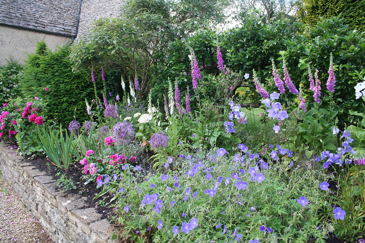 Traditional English summer herbaceous border with Roses, Foxgloves, Alliums, Geranium and Campanula