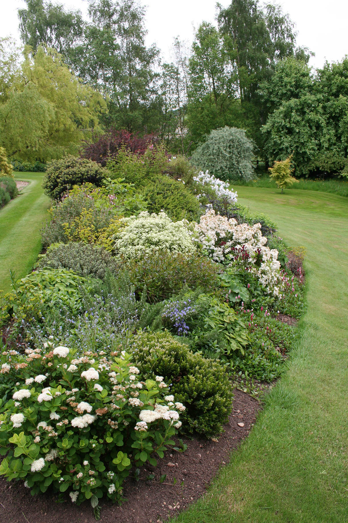 Mixed Shrub and Perennial Border