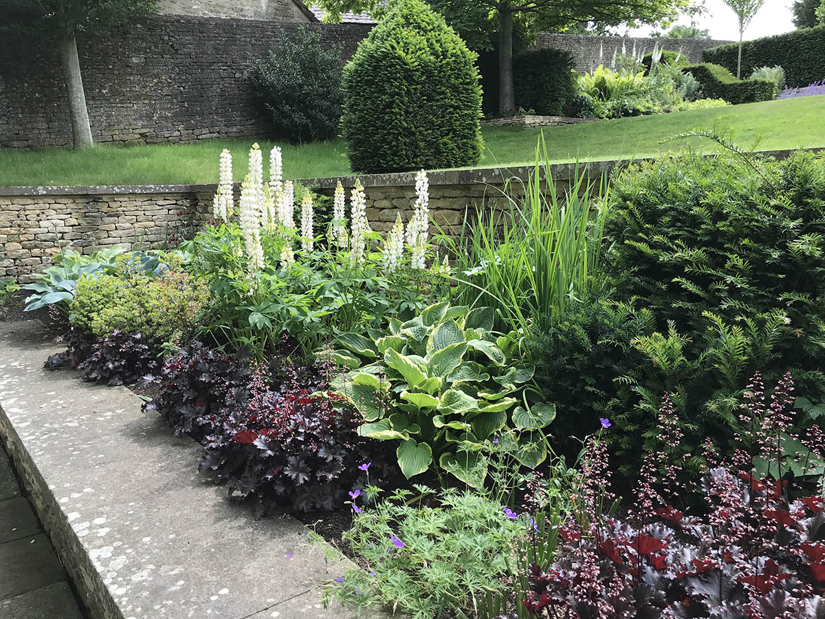 Early summer herbaceous planting with Heuchera Obsidian, Hostas and white Lupins. The white Foxgloves in the distance reflect the planting scheme.
