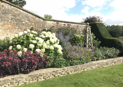 An existing summer border with the deep maroon Sedum, white Hydrangea Annabel, blue Geranium Roxanne, Perovskia and Eupatorium Purpureum